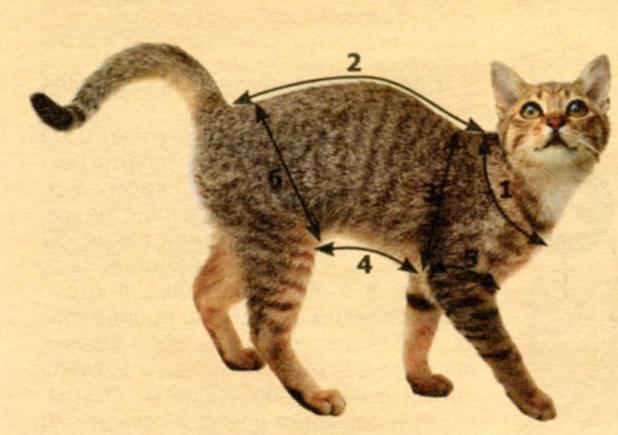Мерки для кошек