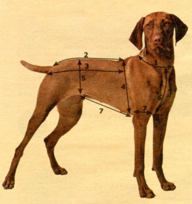 Мерки для собак